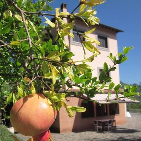 Anticoli Corrado的民宿