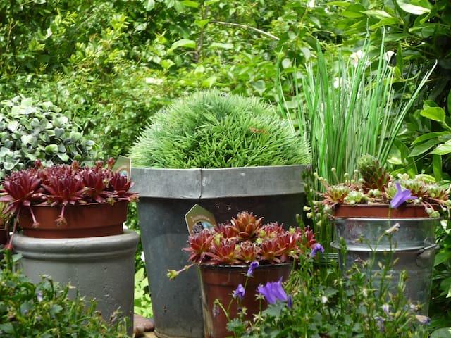 Toute petite maison dans la verdure