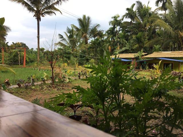 Dandeli lemon tree jungle stay