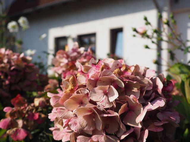 Sassnitz的民宿