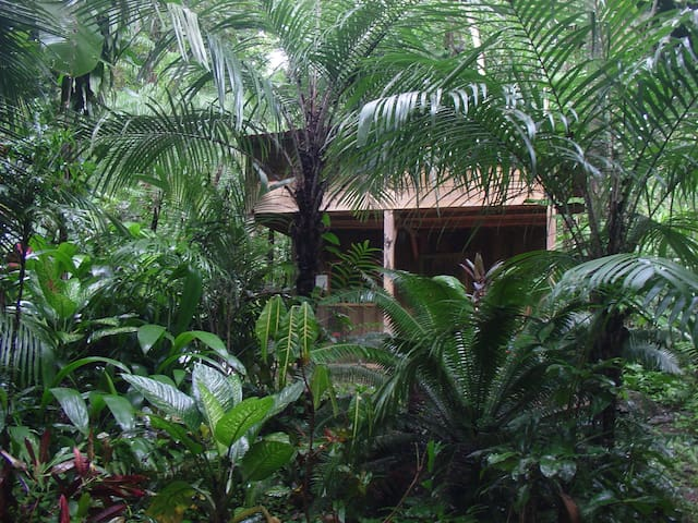 Cabaña dúplex en la selva