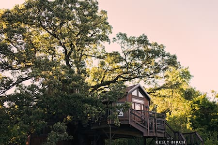 Tree house treehouse lofty lodge