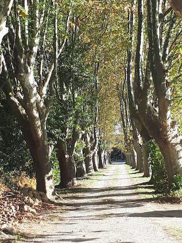 普罗旺斯地区萨隆的民宿