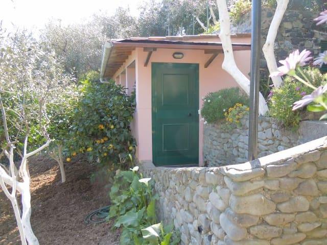 蒙泰罗索阿尔马雷 (Monterosso al Mare)的民宿