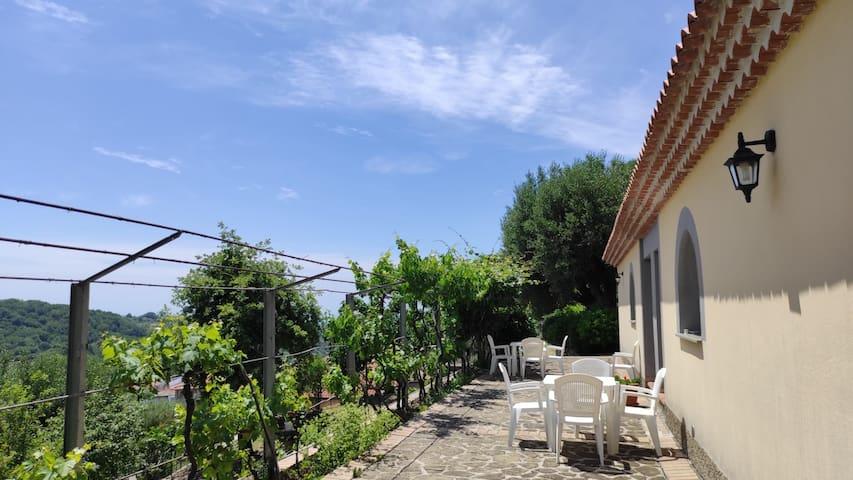 Novi Velia的民宿