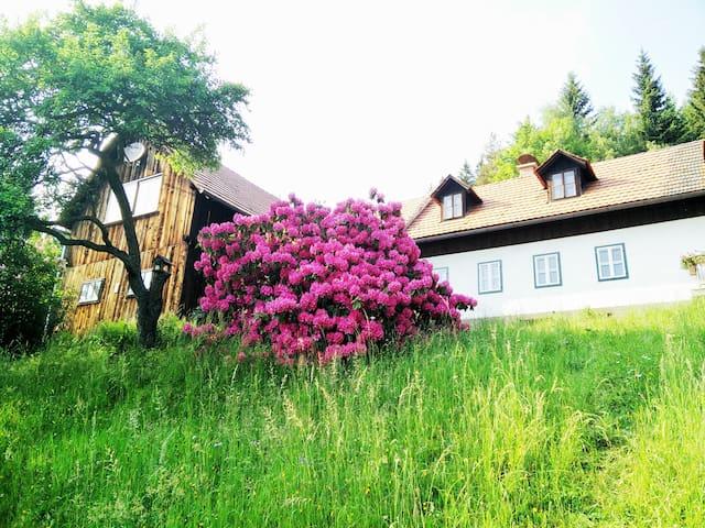 Miesenbach bei Birkfeld的民宿