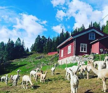 Cosy farmhouse at alpacafarm