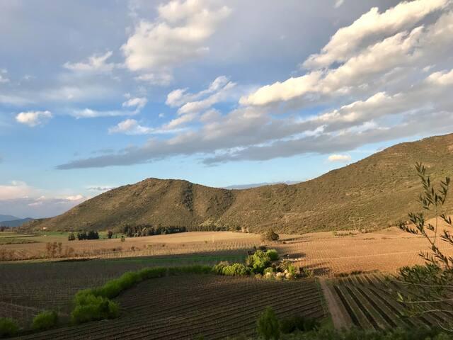 Casa de campo, vińedos y olivos, fundo el encanto