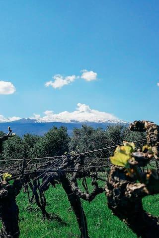 西西里岛弗兰卡维拉的体验