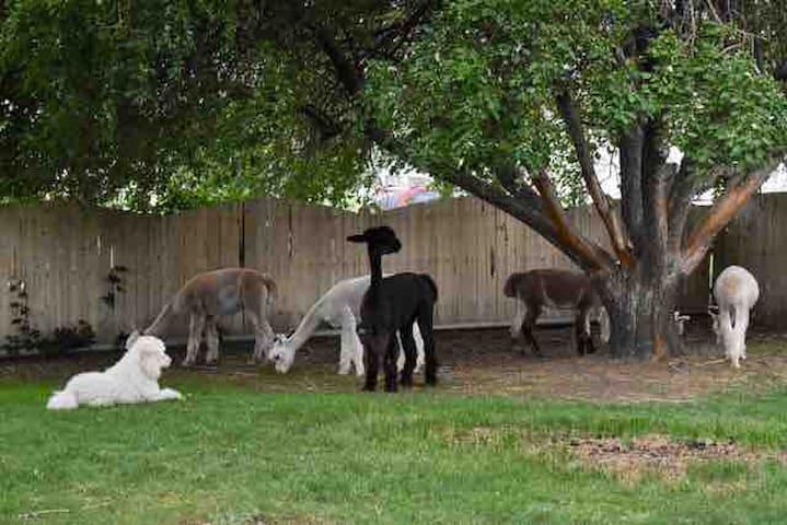 Bowdust Alpaca Ranch Fiber Arts Studio Twin Room