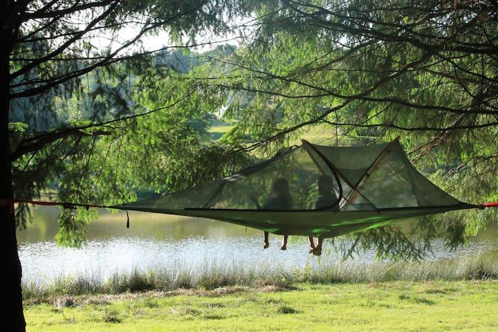 tentes suspendues dans les arbres au bord de l'eau