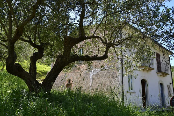 Torre De' Passeri的民宿