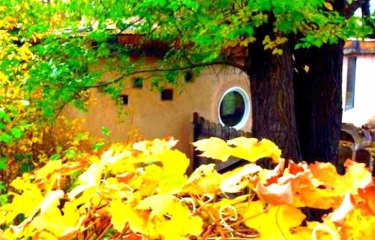 The Hobbit House in downtown Paonia