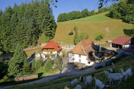 """Steinmühle: Ferienwohnung """"Spitzwegerich"""""""
