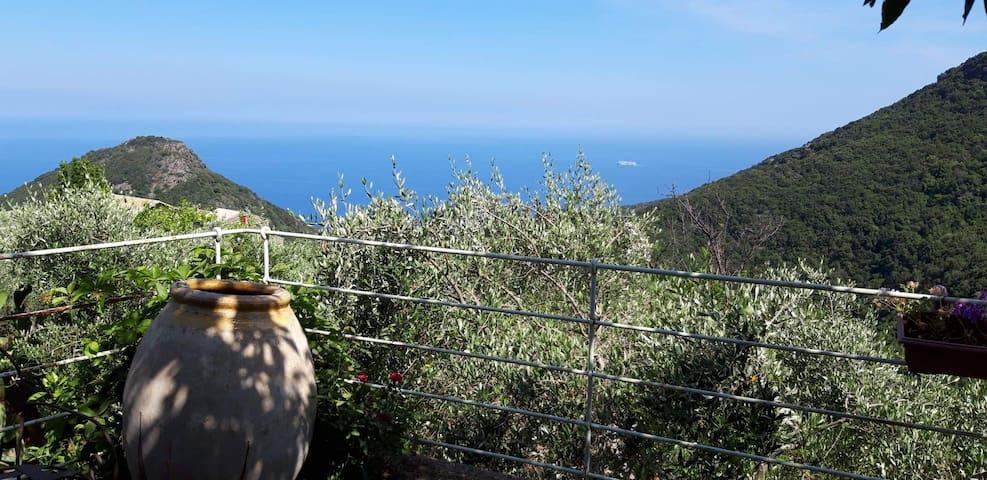 San-Martino-di-Lota的民宿