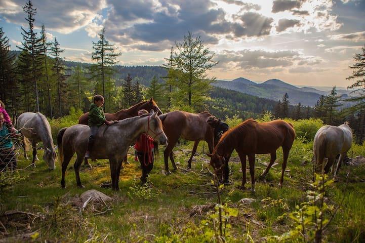 Grandma House - horses, peace and mountains.