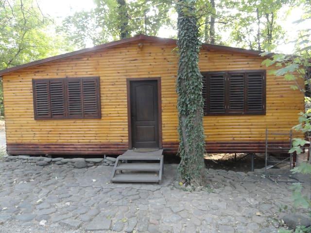 Pleven的民宿