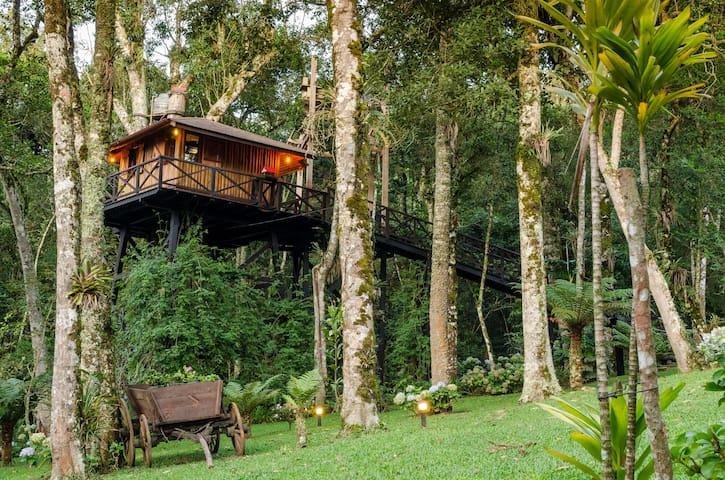 Casa na Árvore nas montanhas (Monte Verde - MG)