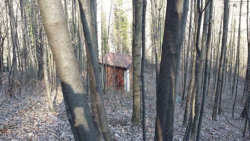 La casina nel Bosco