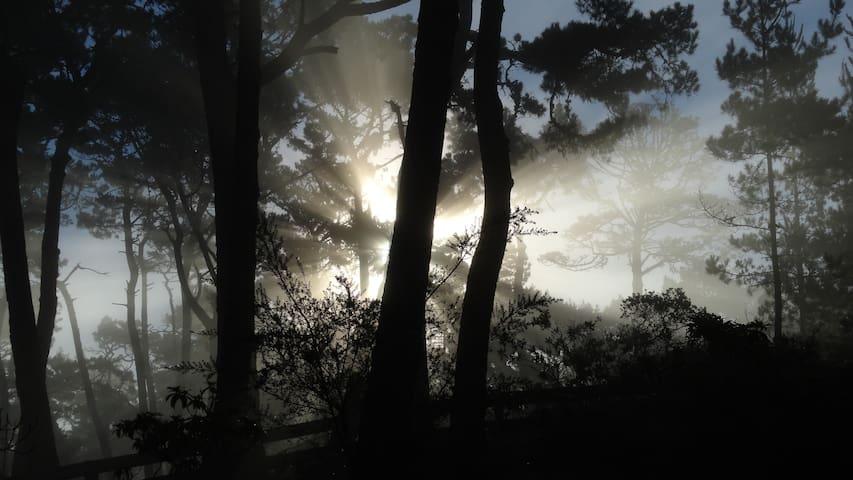 特拉华州山地林场的民宿