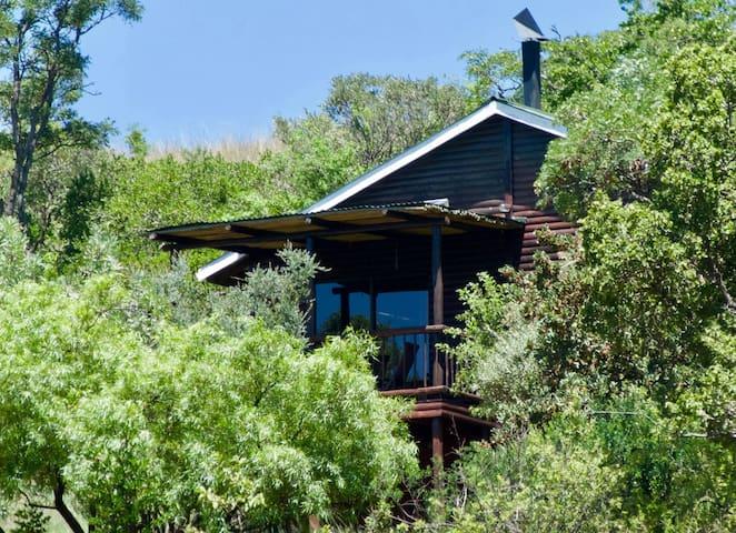 Wild Syringa on Kokopelli Farm