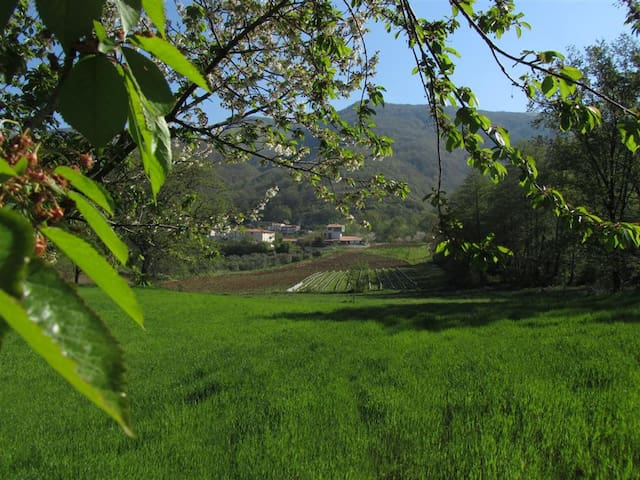 Cetraro的民宿