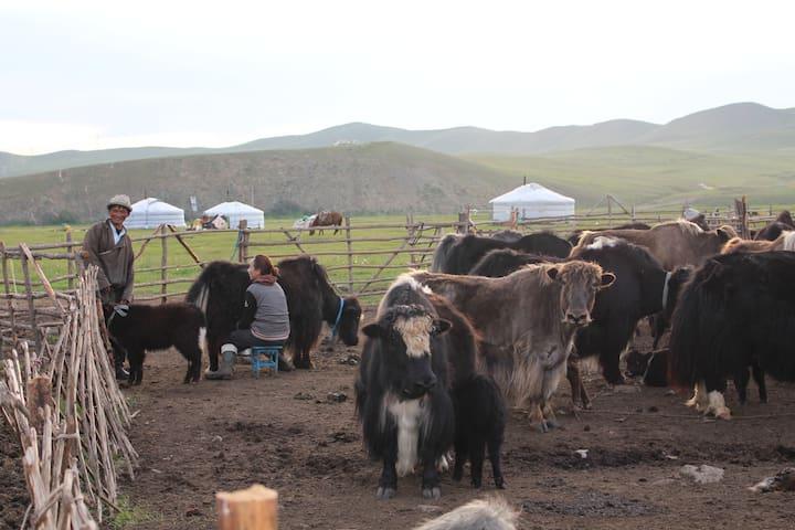 Ulaanbaatar的民宿