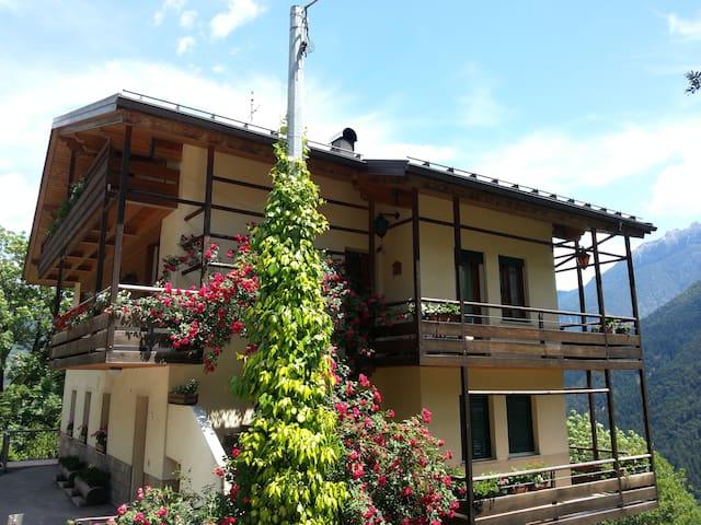 Pieve di Cadore-Dolomiti的民宿