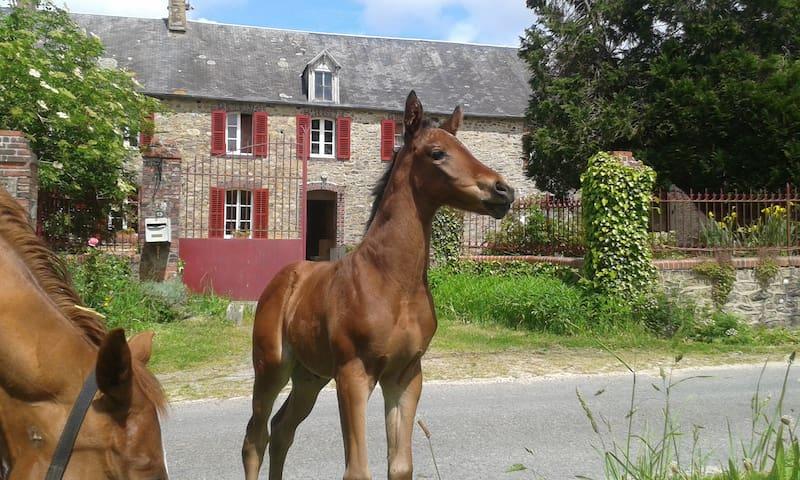 Le Mesnil-Vigot的民宿