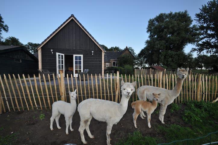 IJsselmuiden的民宿