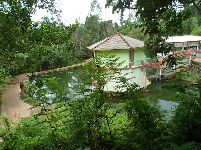 Jungle Track Eco Lodge - Sinharaja, Kalawana