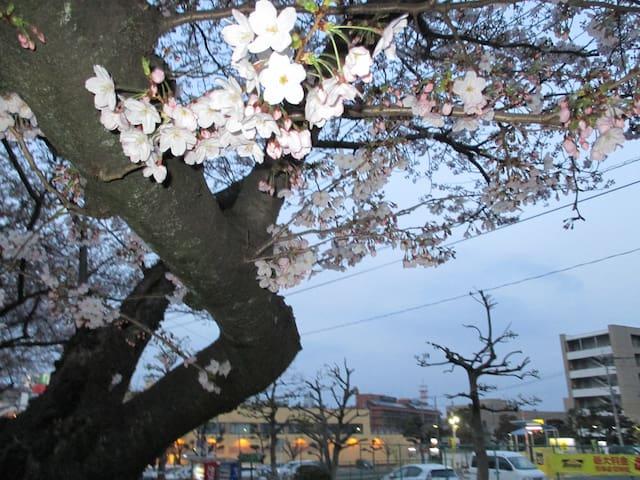 Kitakyūshū-shi的民宿
