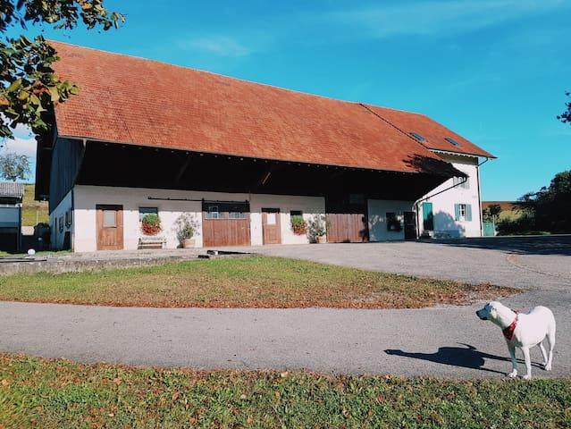 Idyllische Erlebnisse auf dem stadtnahen Bauernhof
