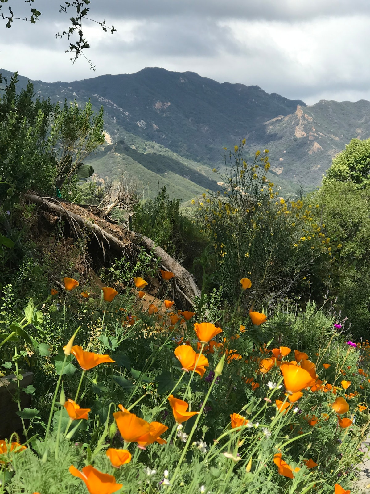 Monte Nido Retreat,  minutes to Malibu/Pepperdine