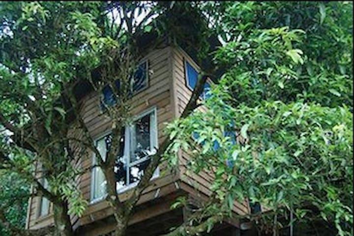 Mango Treehouse