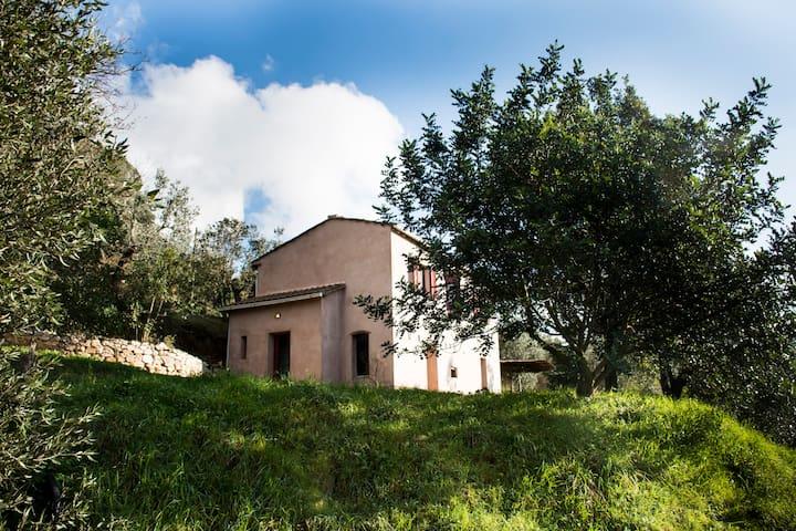 Organic farm in the hills in Castagneto Carducci