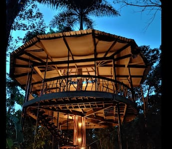 Treehouse of the Royal Palm