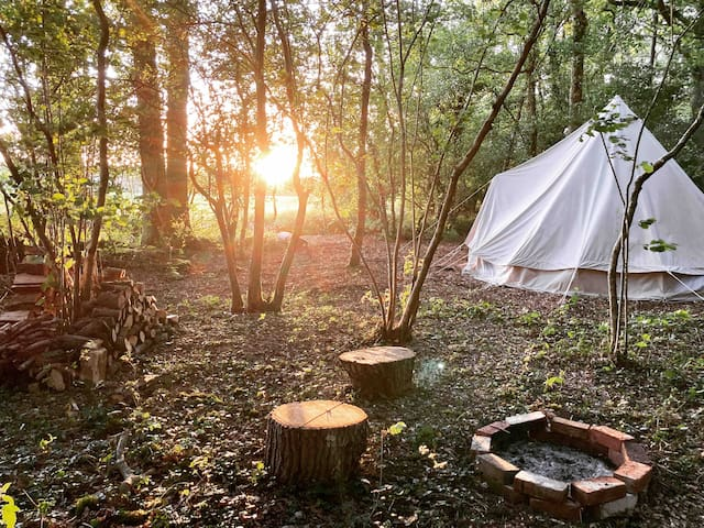 Woodland Bell Tent in the South Downs