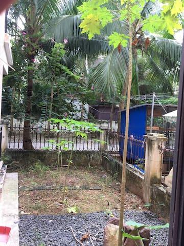 海南有木瓜树 能种菜 有古琴的小院