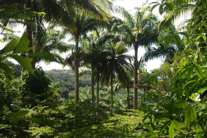 Tropical Forest Camping @campingbarbados