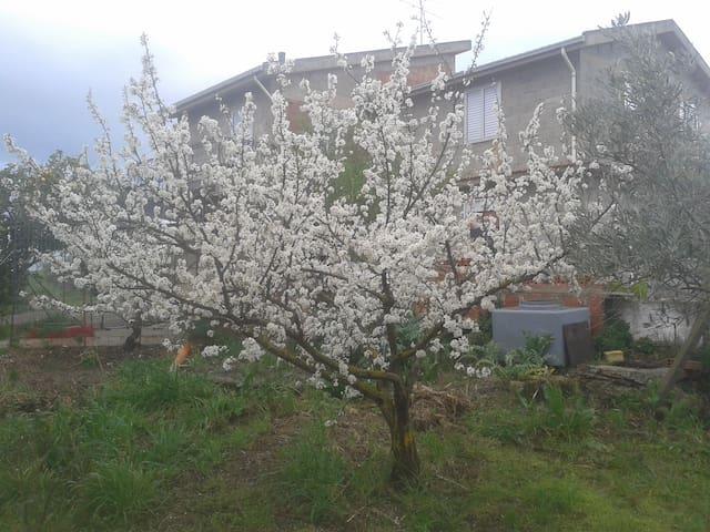 Villarosa的民宿