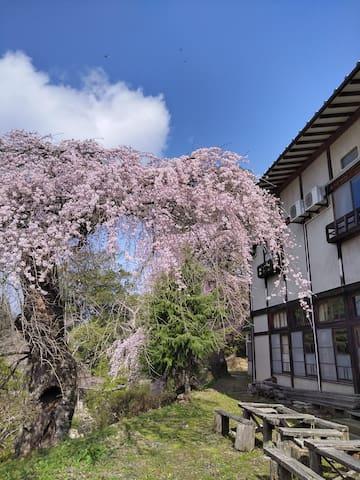 Nihommatsu的民宿