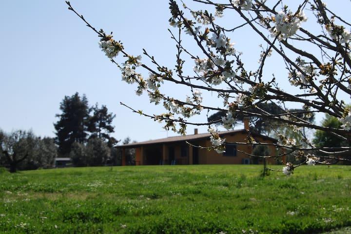 Vigna di Valle的民宿