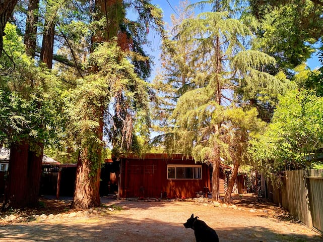 Redwood Retreat in the Heart of Silicon Valley