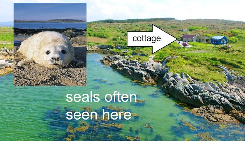 5* cottage + PRIVATE BEACH + 7 acres land x4, Pets