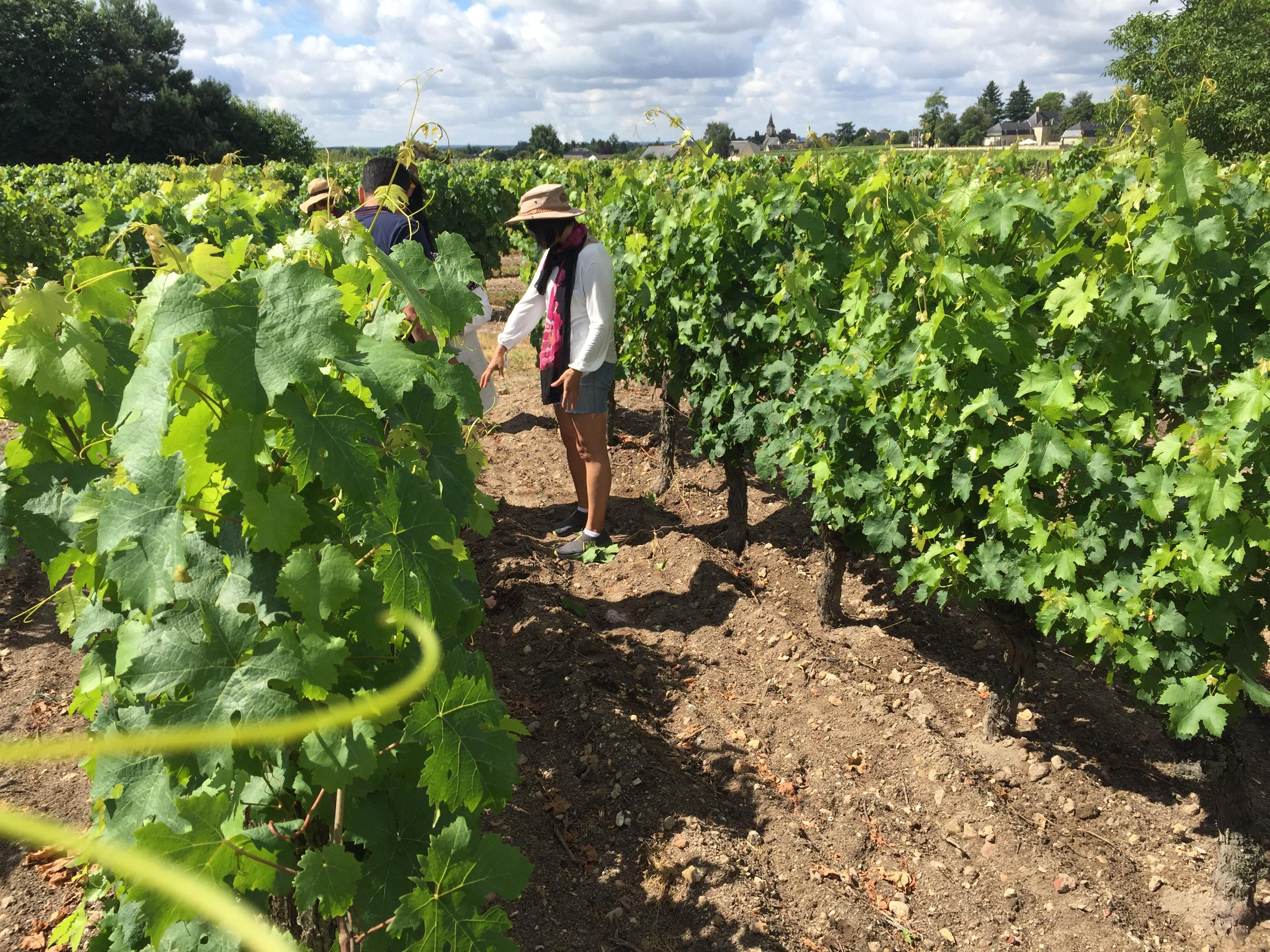 Passing Vineyards