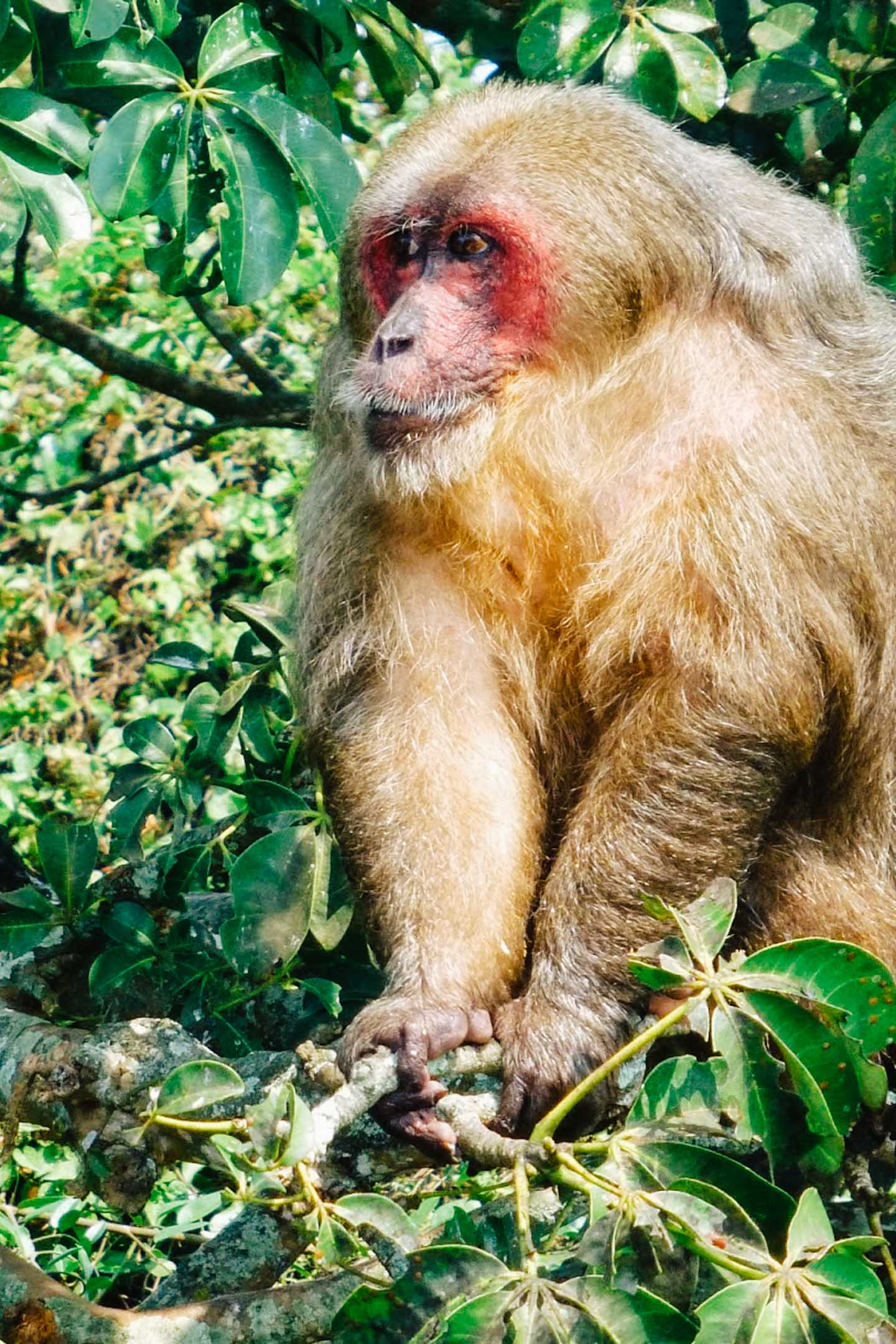 Monos macacos en Catemaco