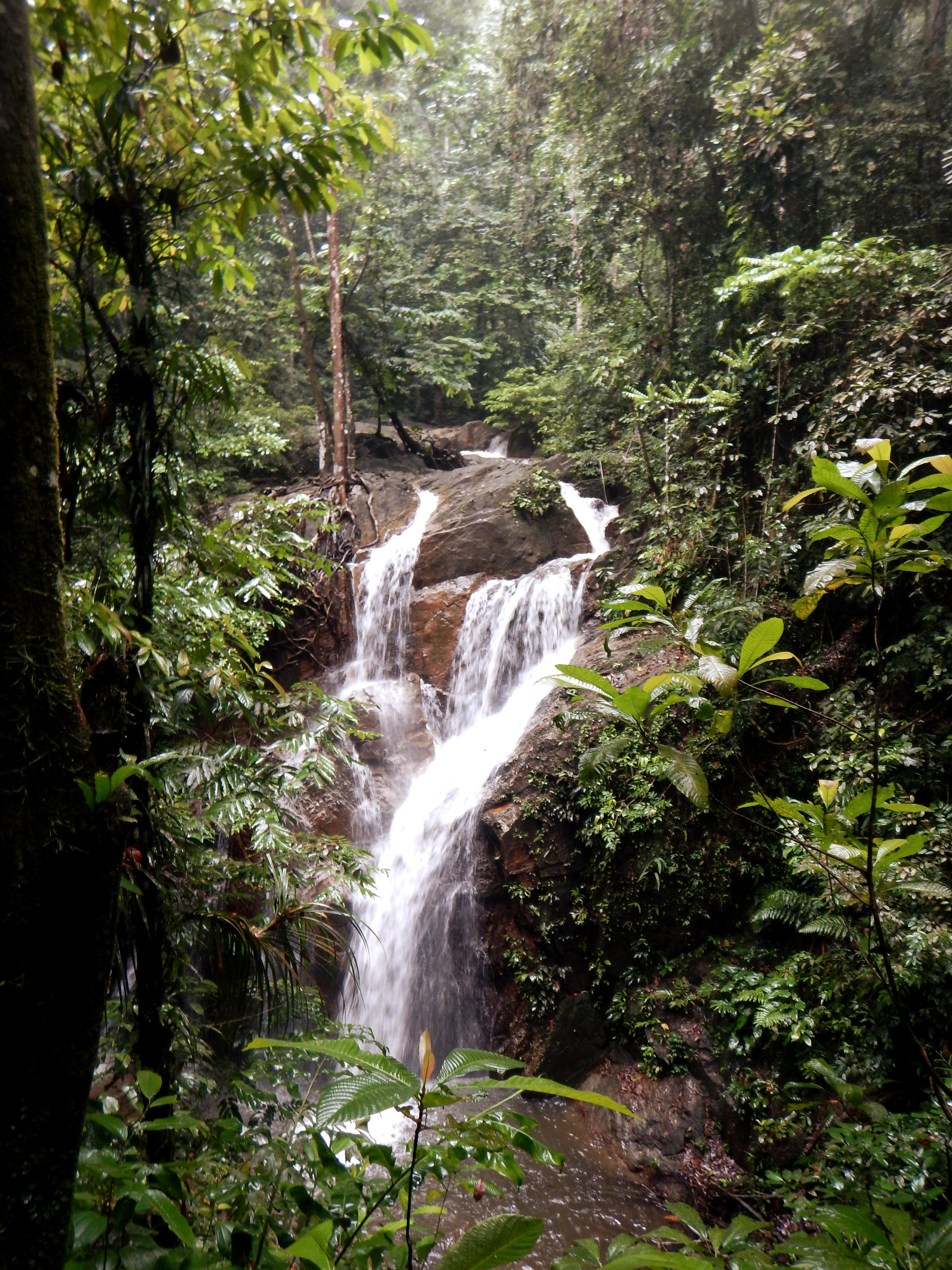 Hidden in the rainforest!