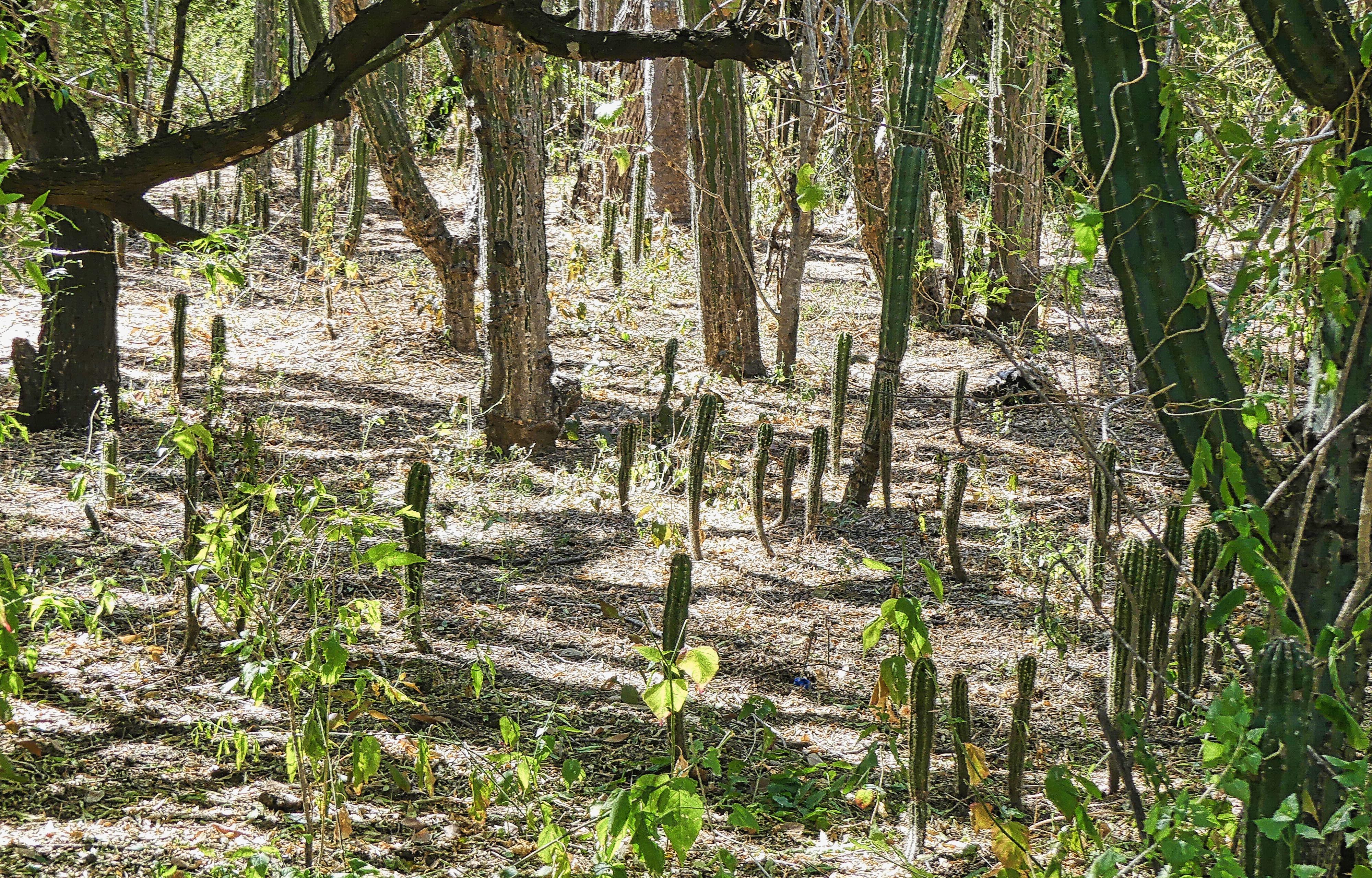 Cactus Sanctuary