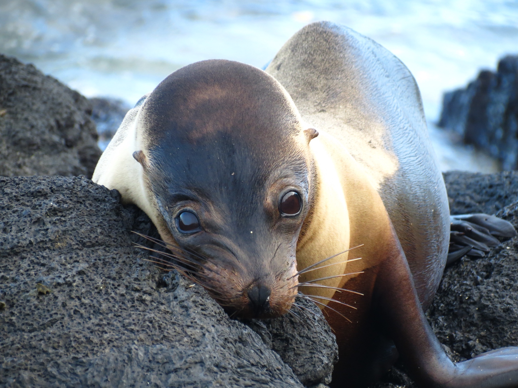 Sea lion love!